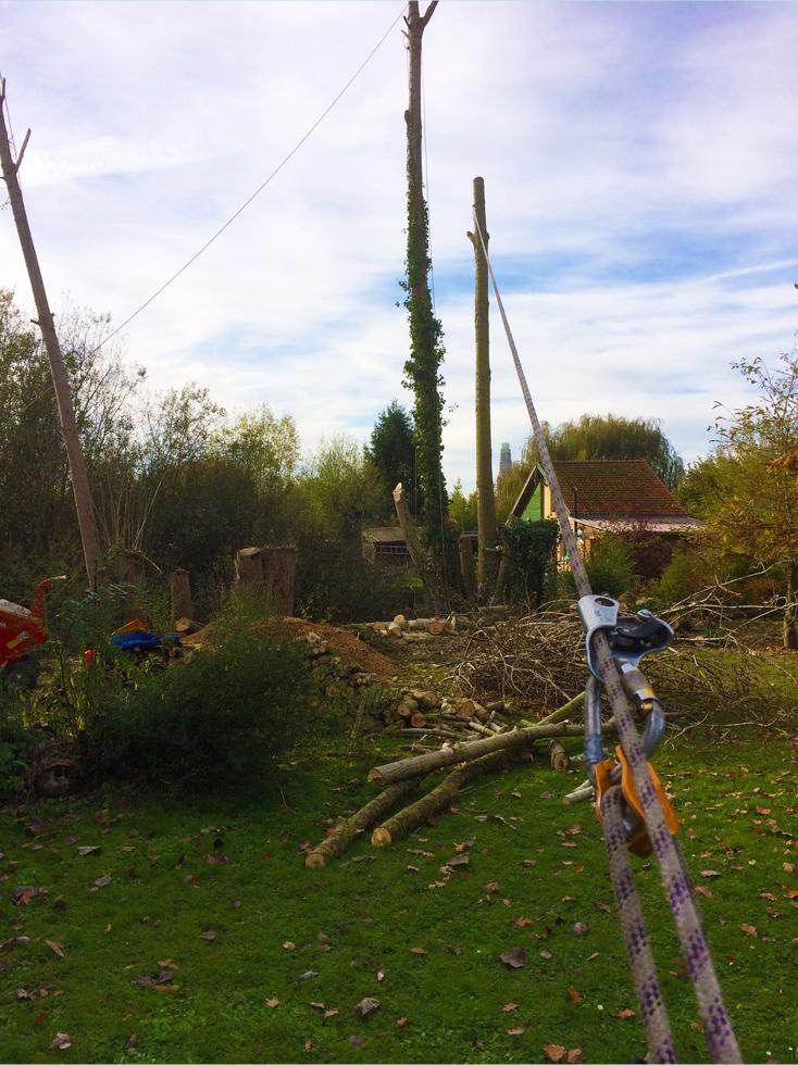 Elagage arbres Valenciennes